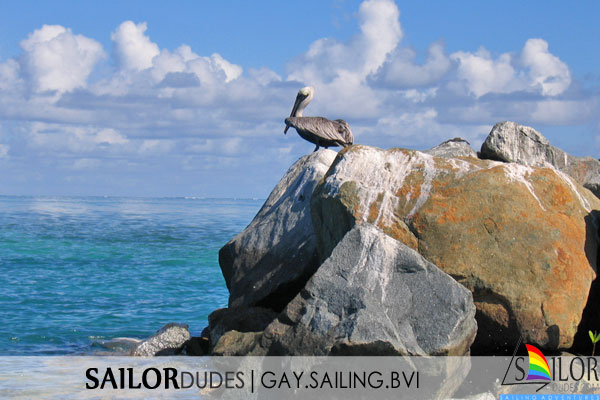 Gay sailing bvi - pelican