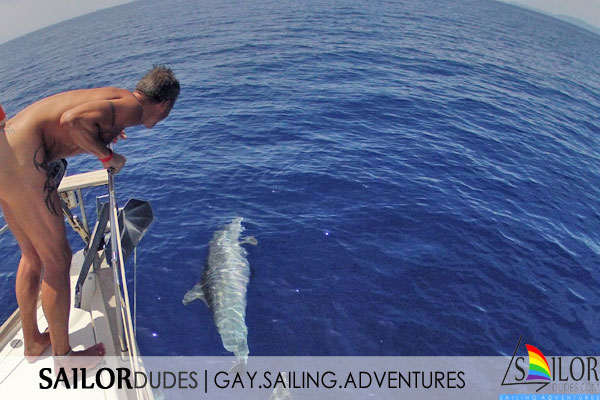 Gay nude sailing Greece - watch Dolphins